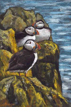 Three puffins on rocks above the sea