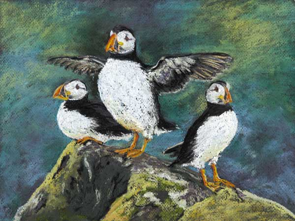 Puffins, Isle of May, Pastel