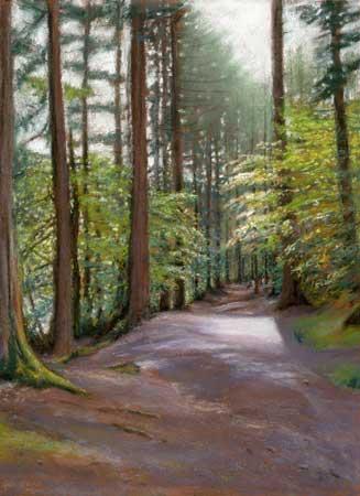 A sunlit path through pine trees