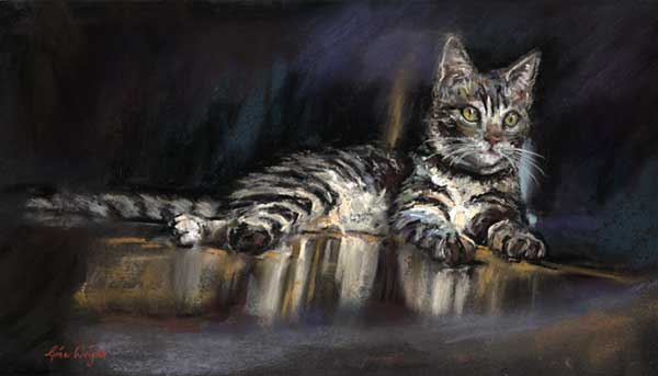 Tabby Reflections