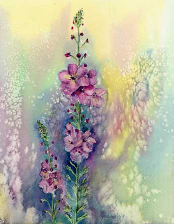 Verbascum, Watercolour