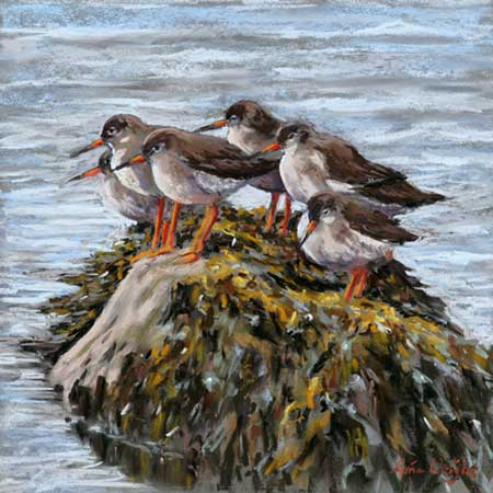 Six Redshanks stand on a seaweed covered rock surrounded by water
