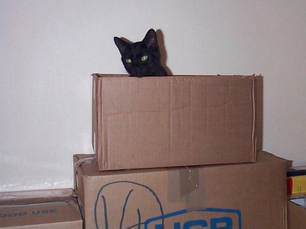 Xena in box during house move