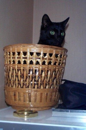 Xena in basket